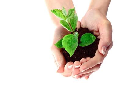 Environmental Groups to Take Root in Singapore